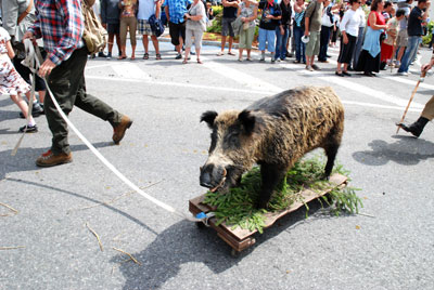 Stuffed boar chasing people in La Clusaz, France, at the Fete du Reblochon