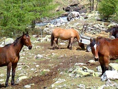 Photo of horses by the Drac Noir