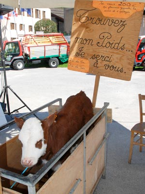 <Photo of a calf for sale in La Clusaz, France'>